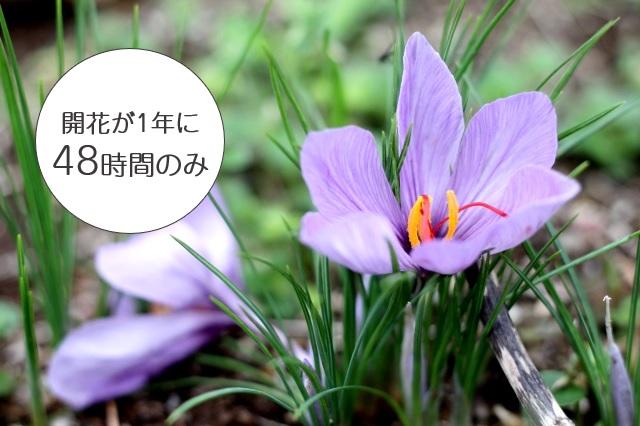 開花時間が短い